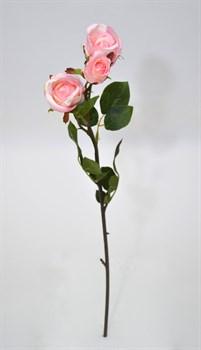 Роза - фото 5002