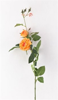 Роза(оранж)(мин24) - фото 9224