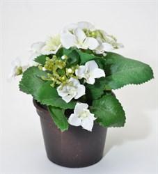 Гортензия в кашпо (12) - белый цвет