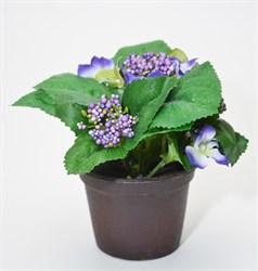 Гортензия в кашпо (12) -фиолетовая
