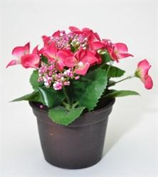 Гортензия в кашпо (12) - розовая