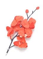 Орхидея на прищепке